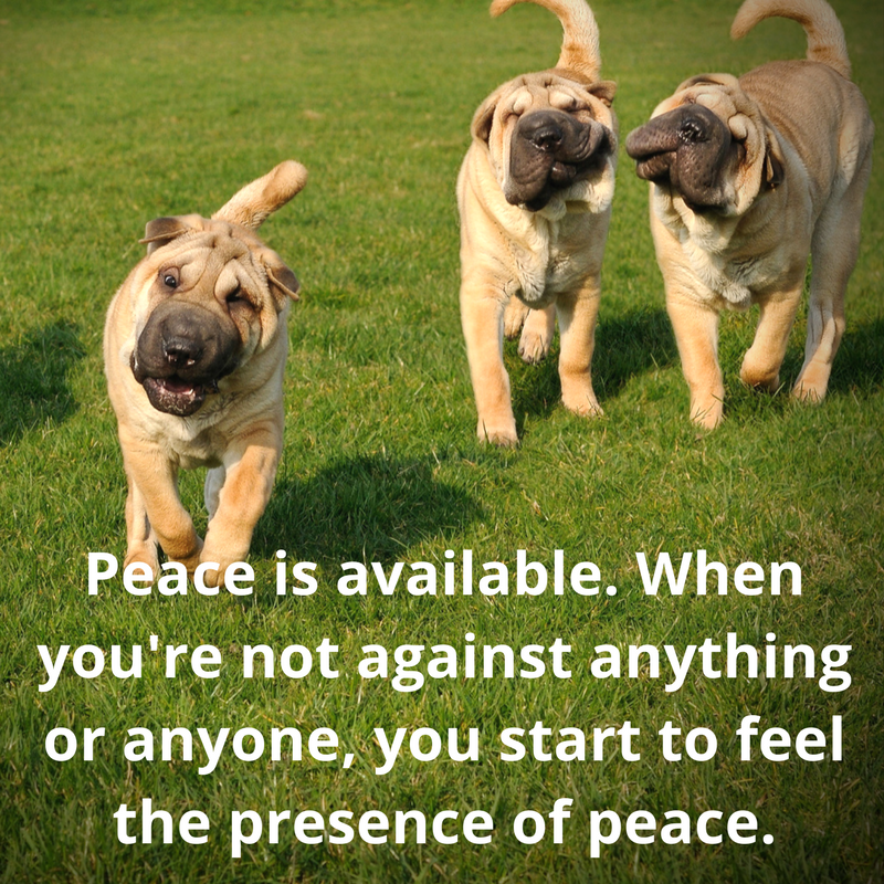 Canva-FB-peace quote pg 8.png
