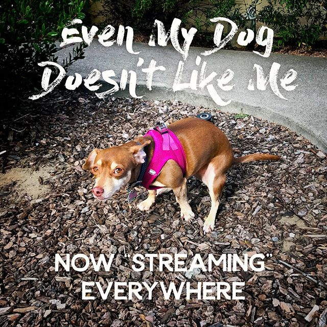 """Our new single, """"Even My Dog Doesn't Like Me"""" now 'streaming' on Spotify. Come have a drink with us live at This Is My Fest on Sept 28th! [link in bio] . . . . #punkpop #punkrock #poppunk #punk #songoftheday #musicoftheday #instasound #rocknroll #newmusic #musiclife #typographyinspired #typography #procreate #californialove #californiadreaming #californiaholics #cali #focalmarked #igerssf #onlyinsf #graphicdesign"""