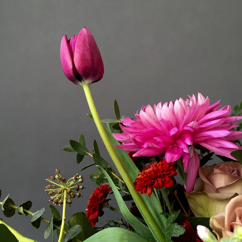 iphonography-flowers-darktulip.jpg