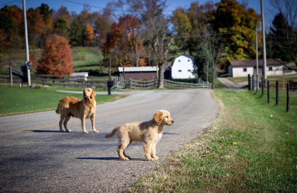Fall Sunday Drive-6.jpg