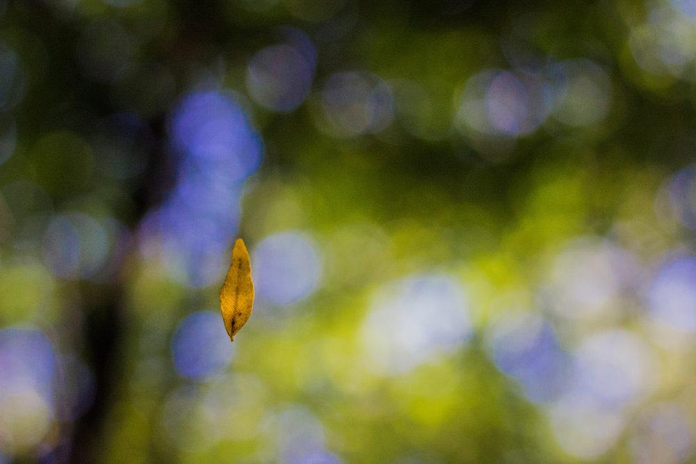 Leaf Floating.jpg