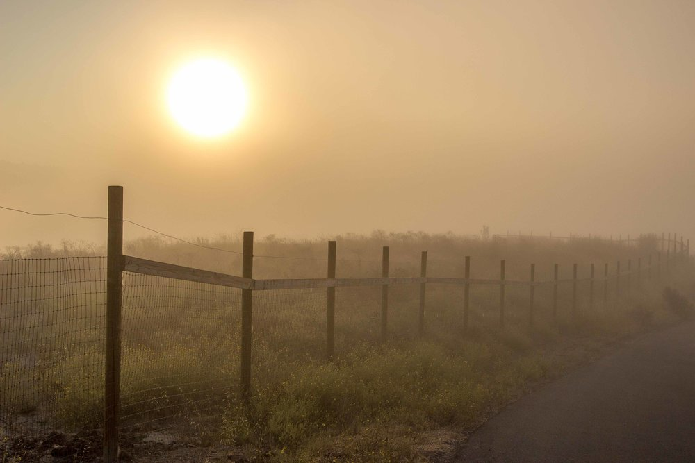 Winding Country Fence