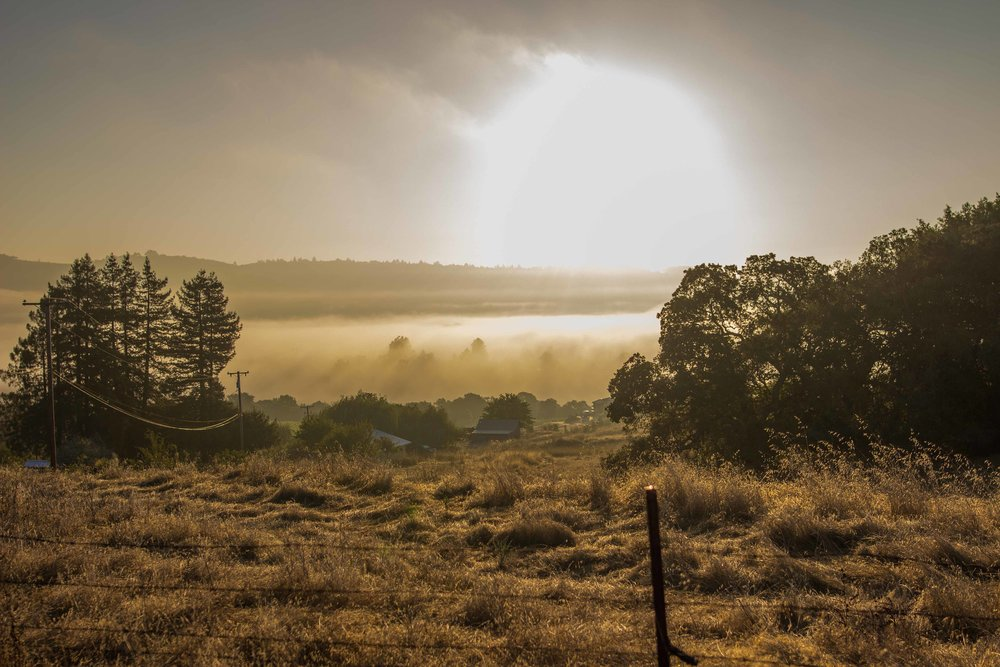 A small valley held onto the fog longer than the higher hills