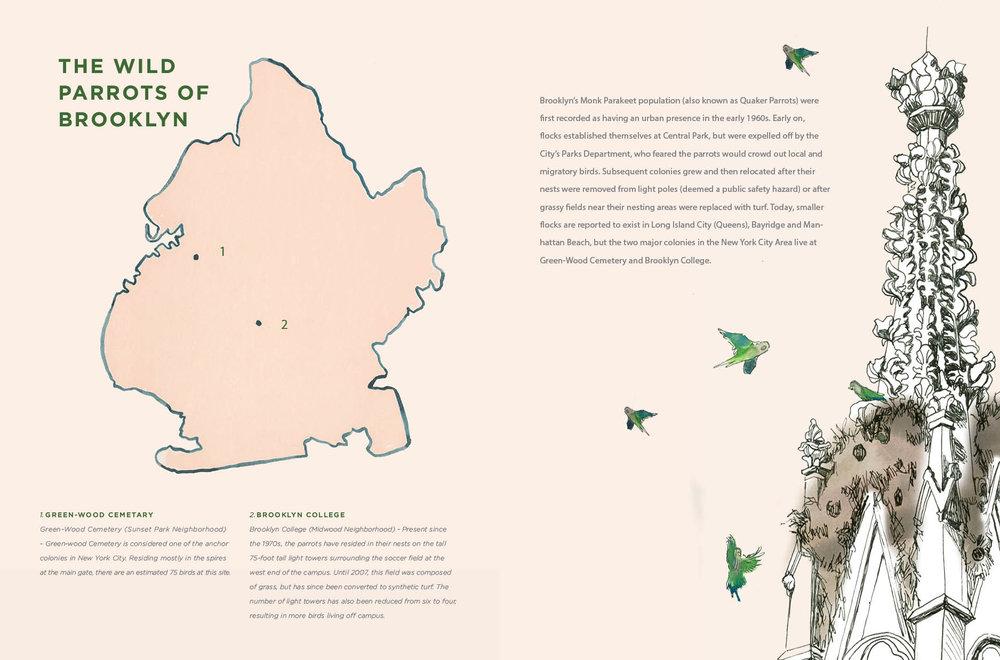 Parrot Spread6.jpg