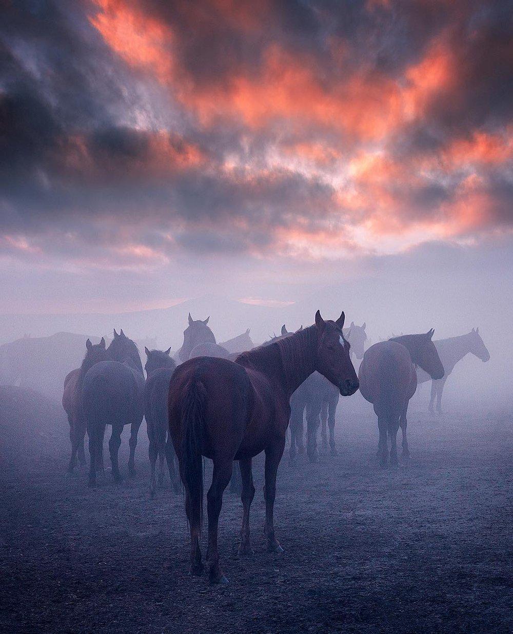 horse_wildlife_photography_1.jpg