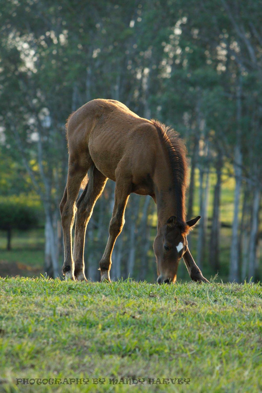 horse_wildlife_photography_6.jpg