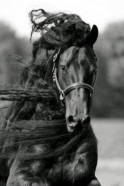 horse_wildlife_photography_17.jpg