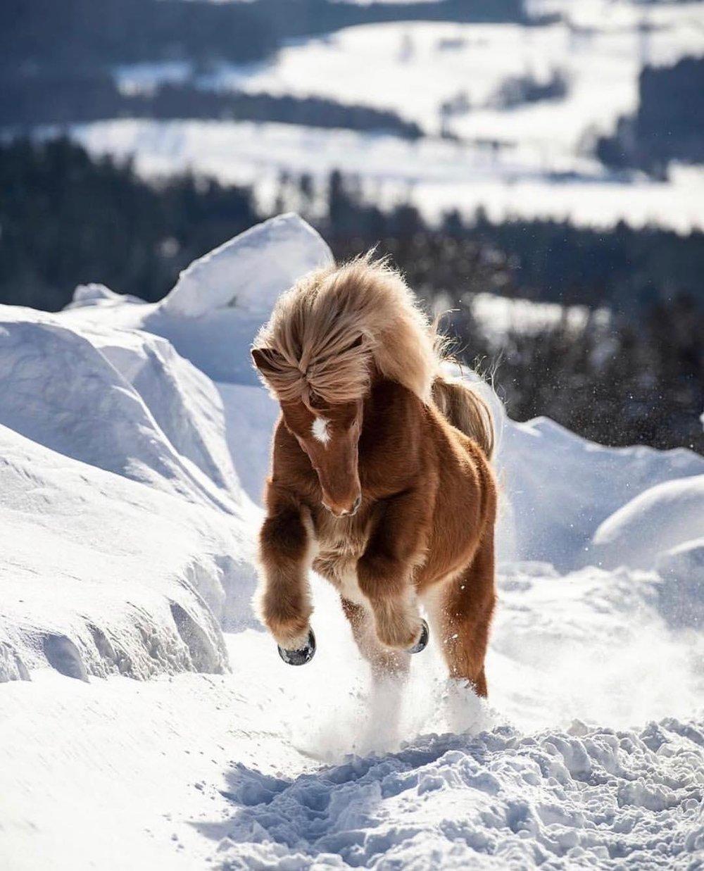 horse_wildlife_photography_24.jpg