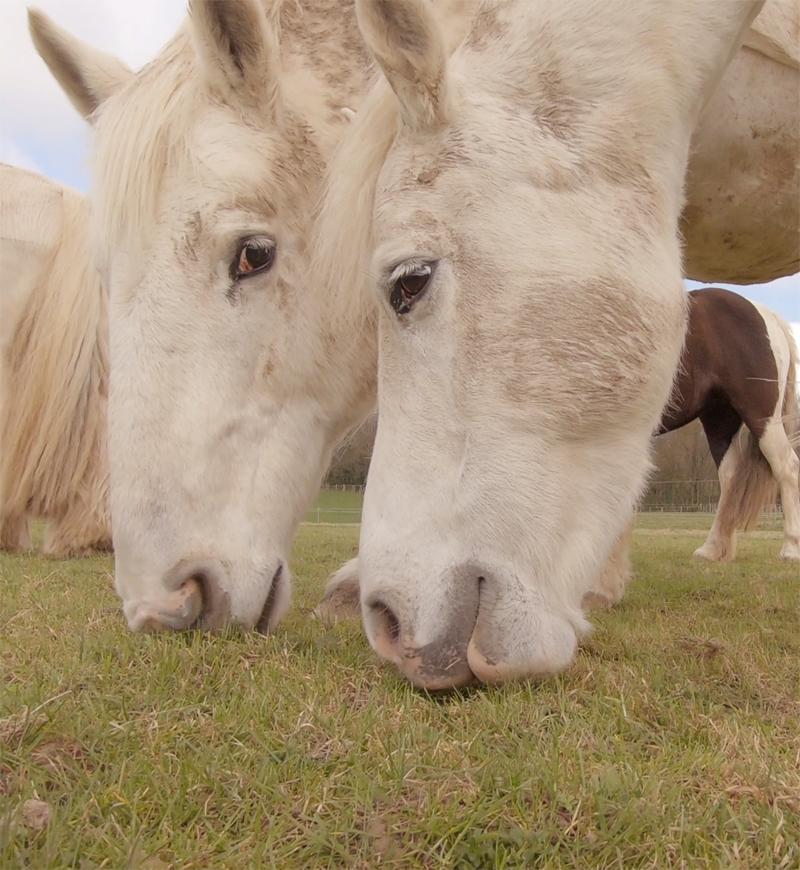 horse_wildlife_photography_18.jpg