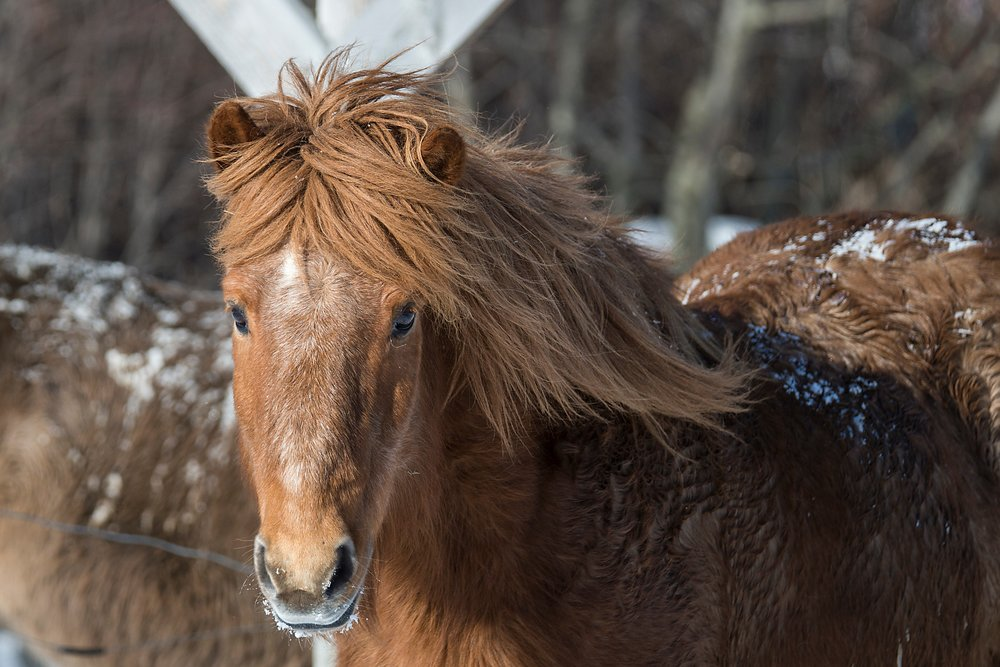 horse_wildlife_photography_3.jpg
