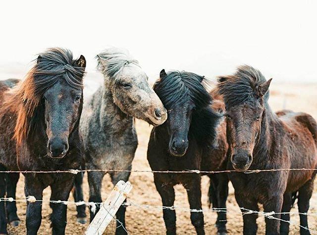 horse_wildlife_photography_5.jpg