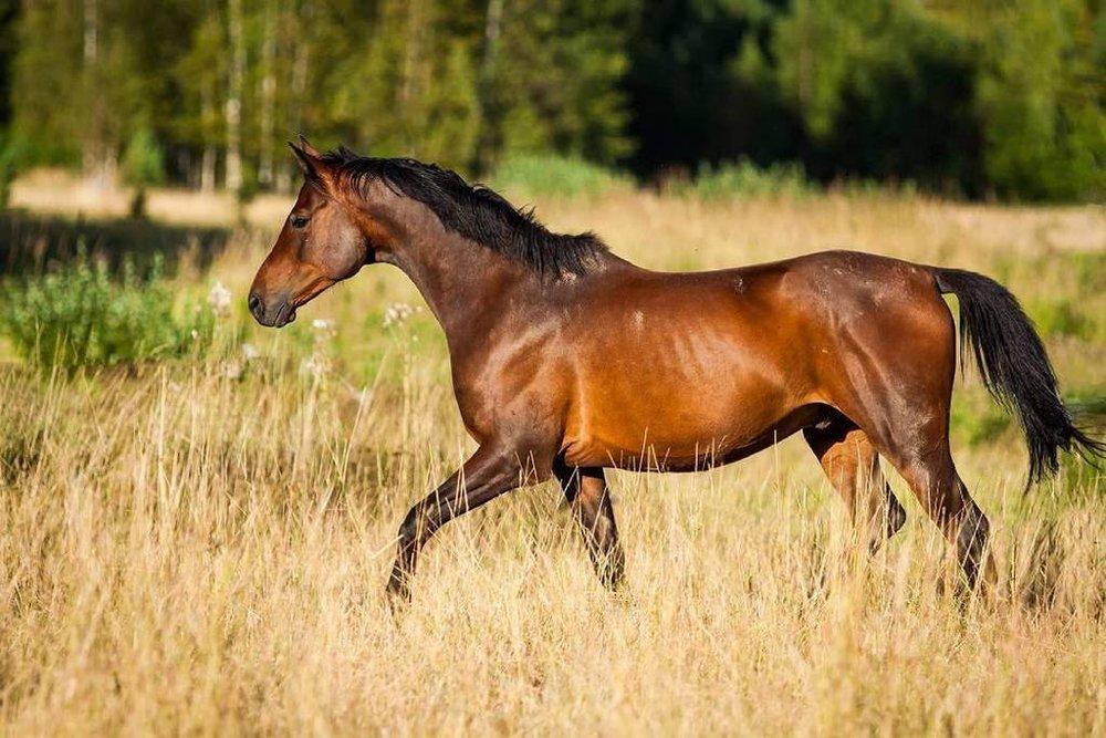 horse_wildlife_photography_11.jpg