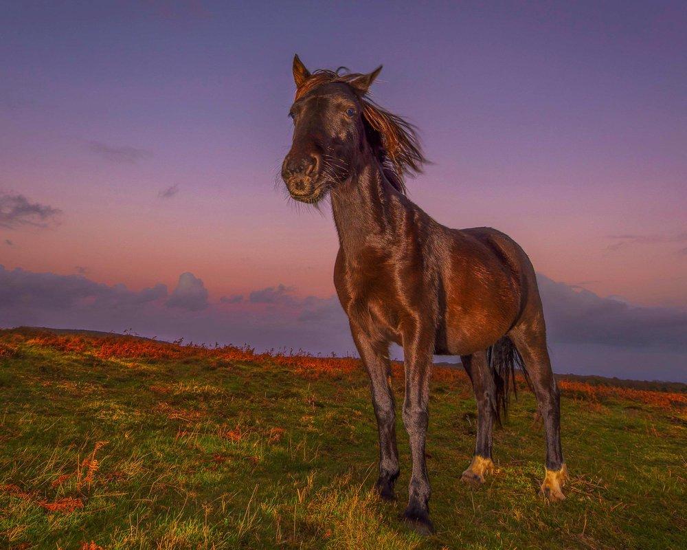 horse_wildlife_photography_12.jpg