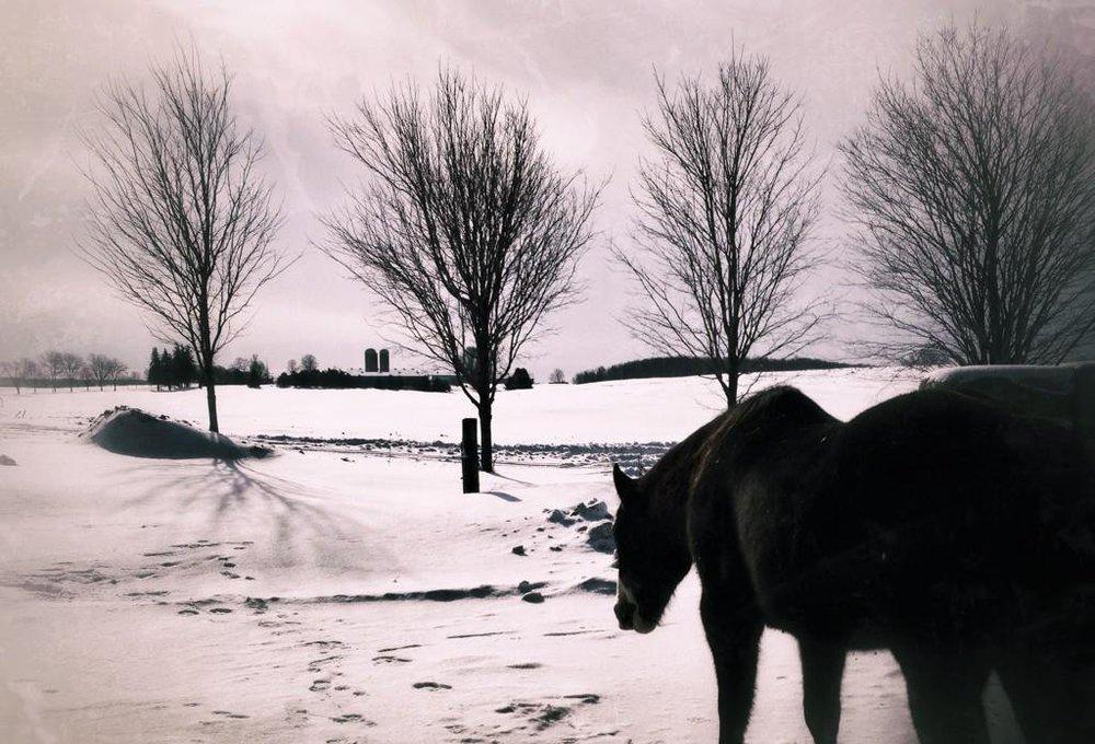 horse_wildlife_photography_15.jpg