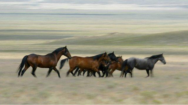 horse_wildlife_photography_19.jpg