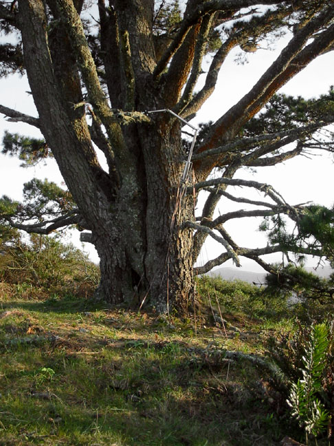 ts_tree2.jpg