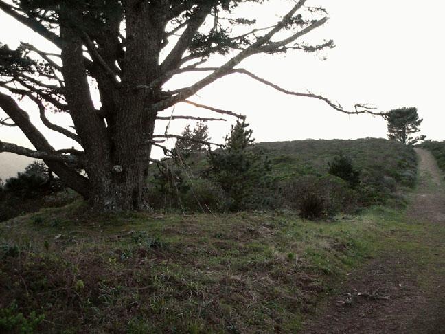 ts_tree6.jpg