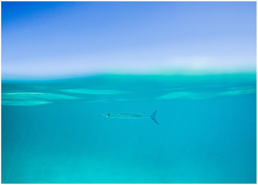fish fiji.jpg