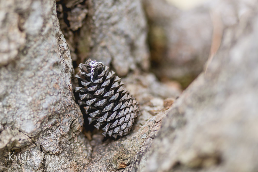 engagement ring in a pine cone