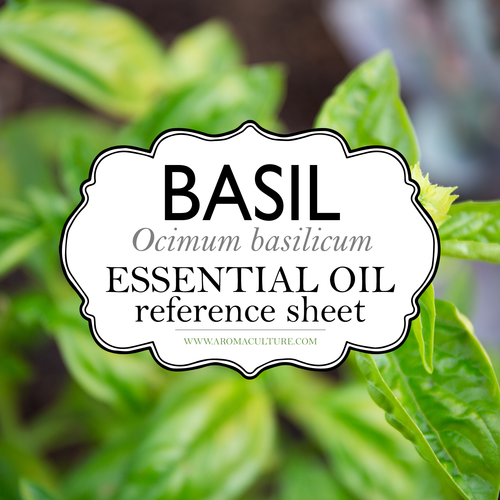 basil essential oil reference sheet printable aroma culture
