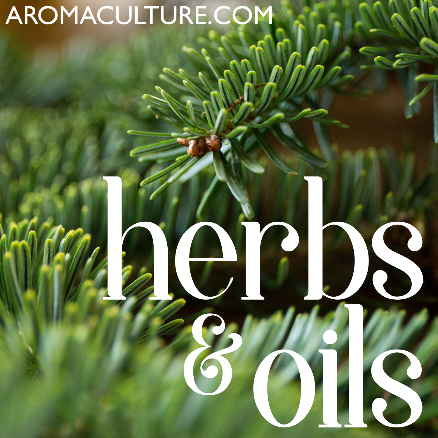 Herbs & Oils Podcast brought to you by AromaCulture com on
