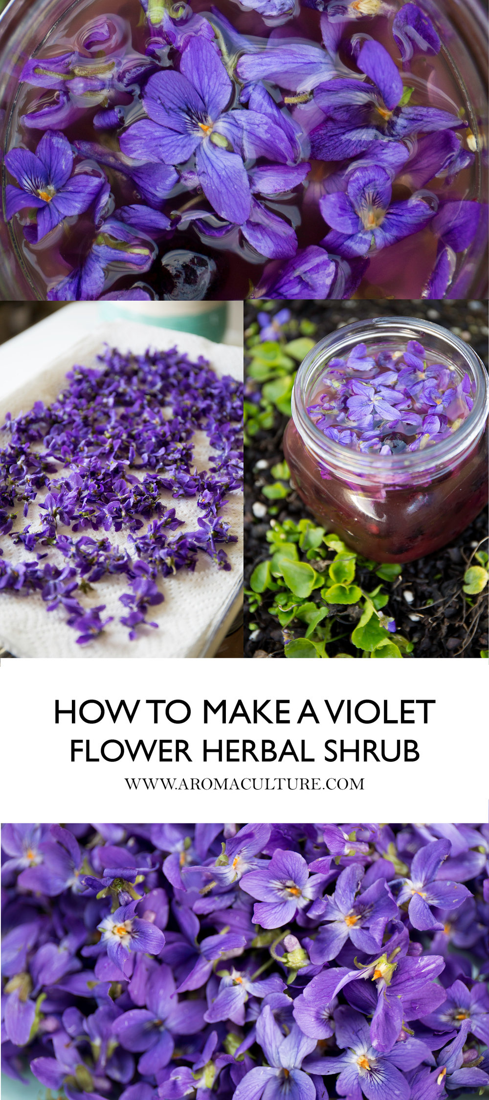 HOW TO MAKE VIOLET FLOWER HERBAL SHRUB BY AROMACULTURE.jpg