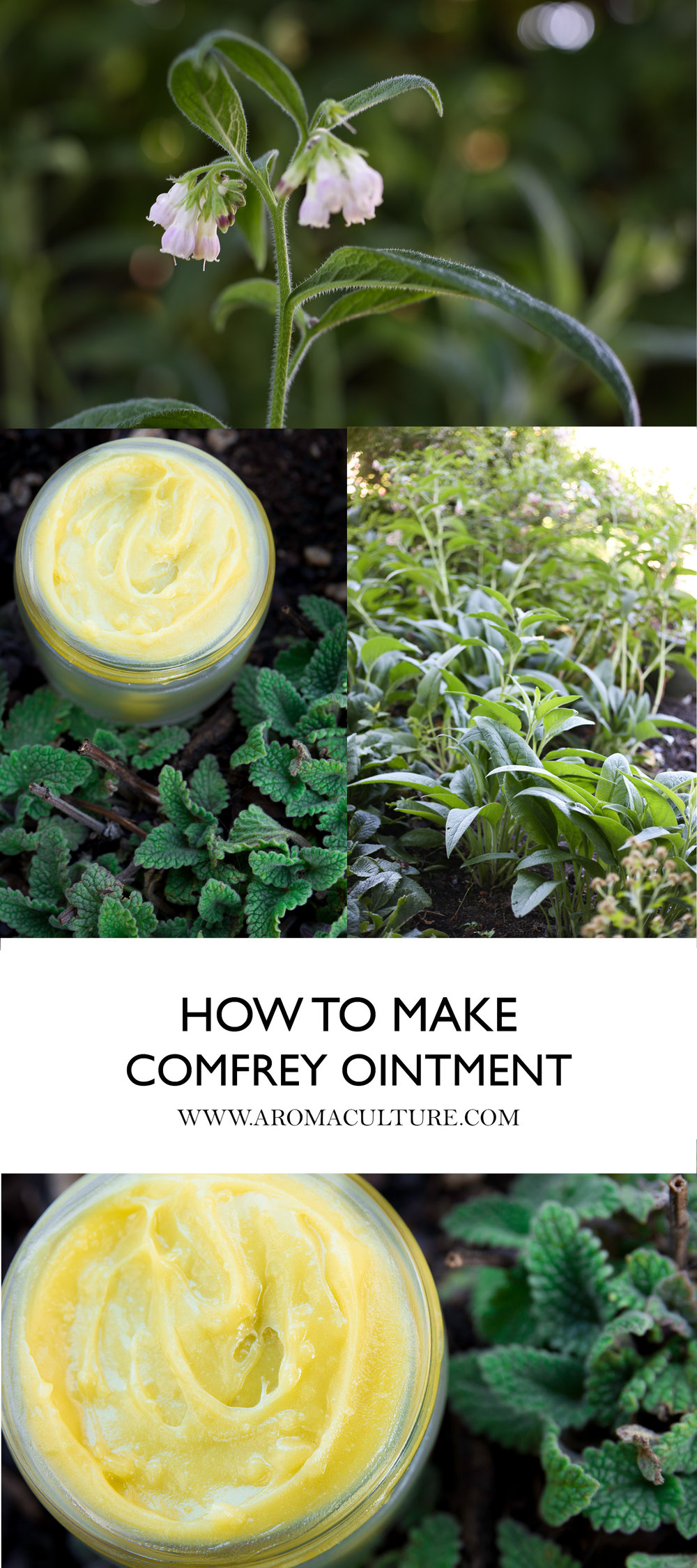 HOW TO MAKE COMFREY OINTMENT BY AROMACULTURE.jpg