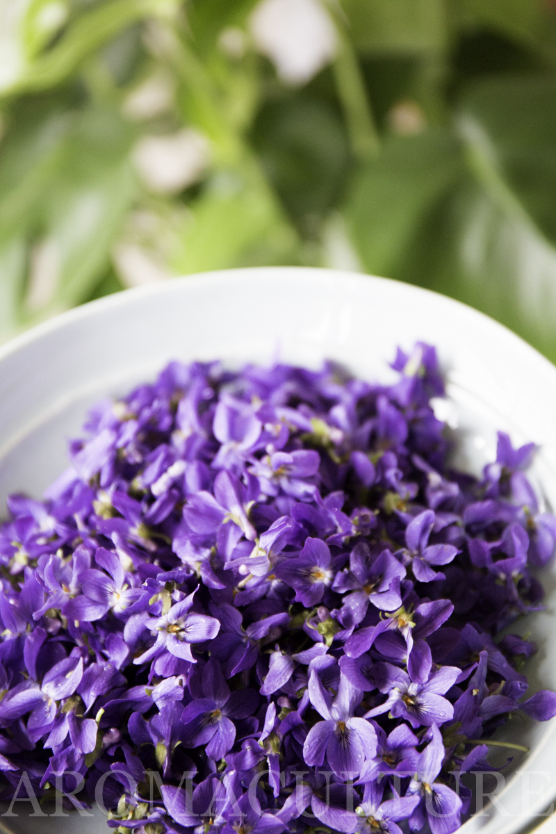 7 Things To Make With Violet Flowers Aroma Culture