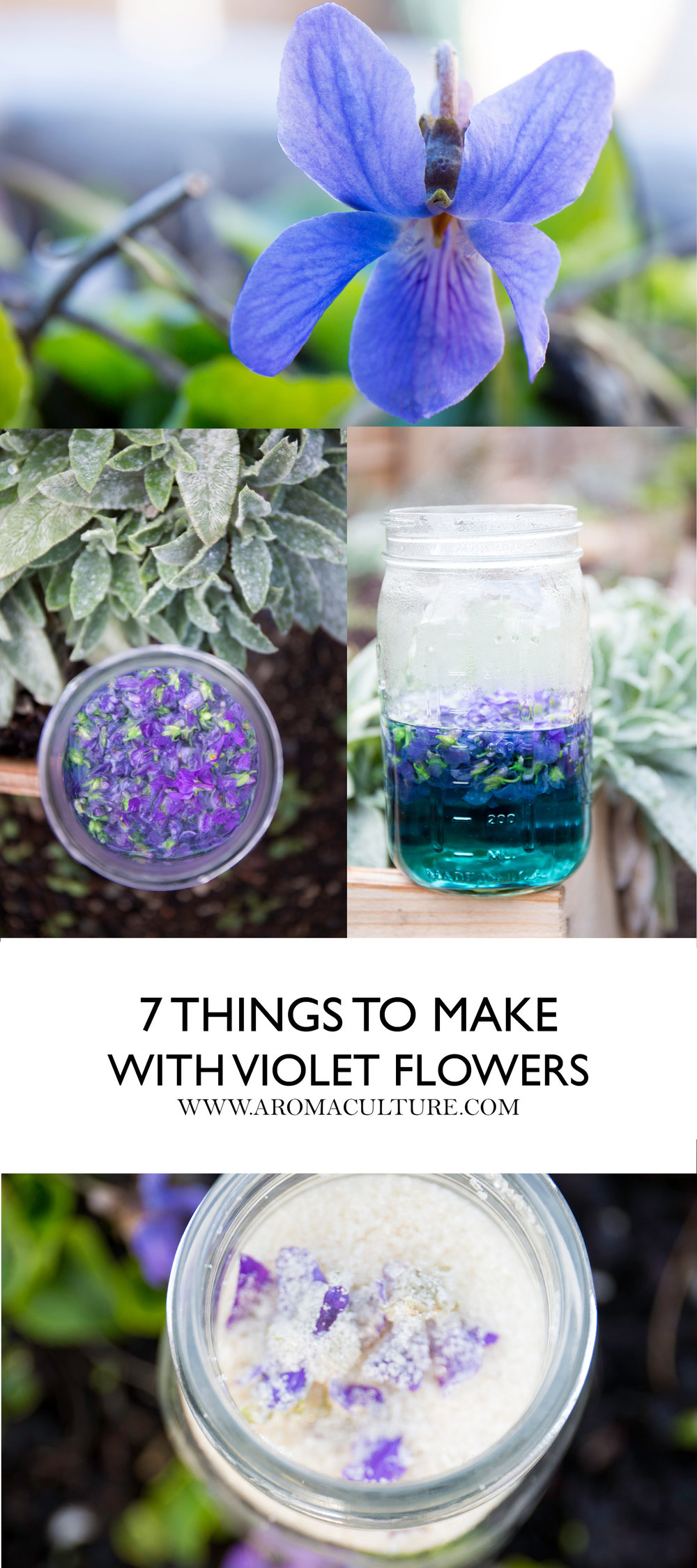 7 THINGS TO MAKE WITH VIOLETS AROMACULTURE.jpg