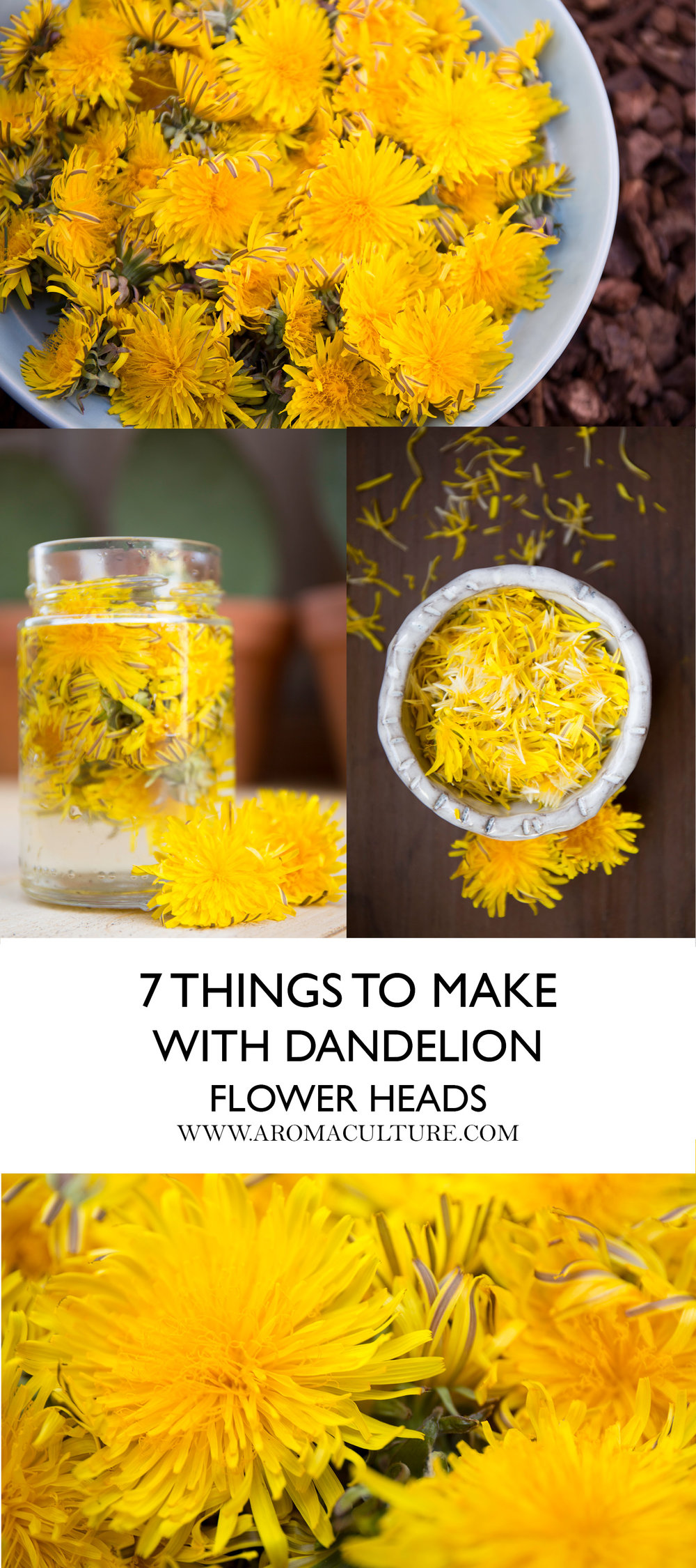 7 things to make with dandelion flower heads aromaculture.jpg