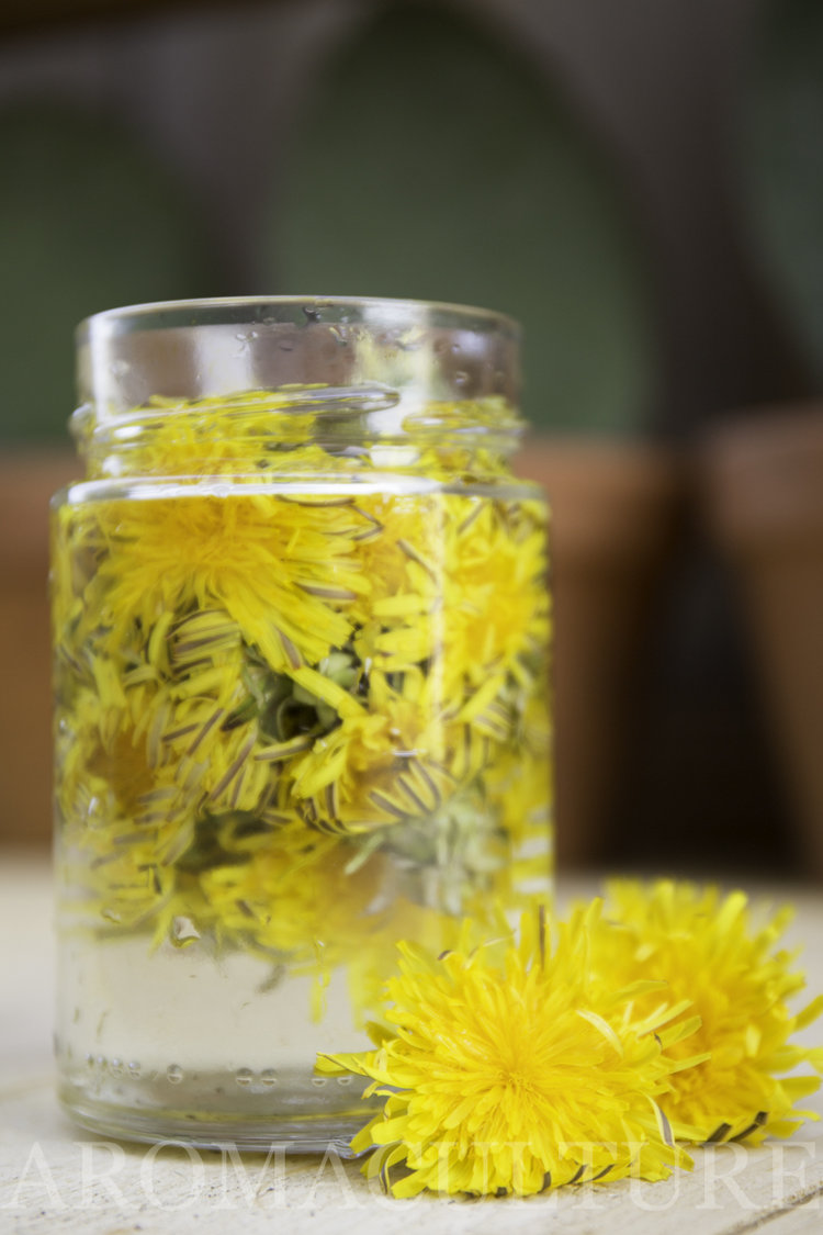 7 things to make with dandelion flower heads — aroma culture