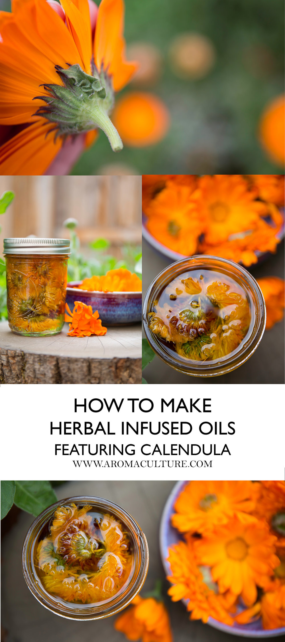 how to make herbal infused oils featuring calendula aromaculture.jpg