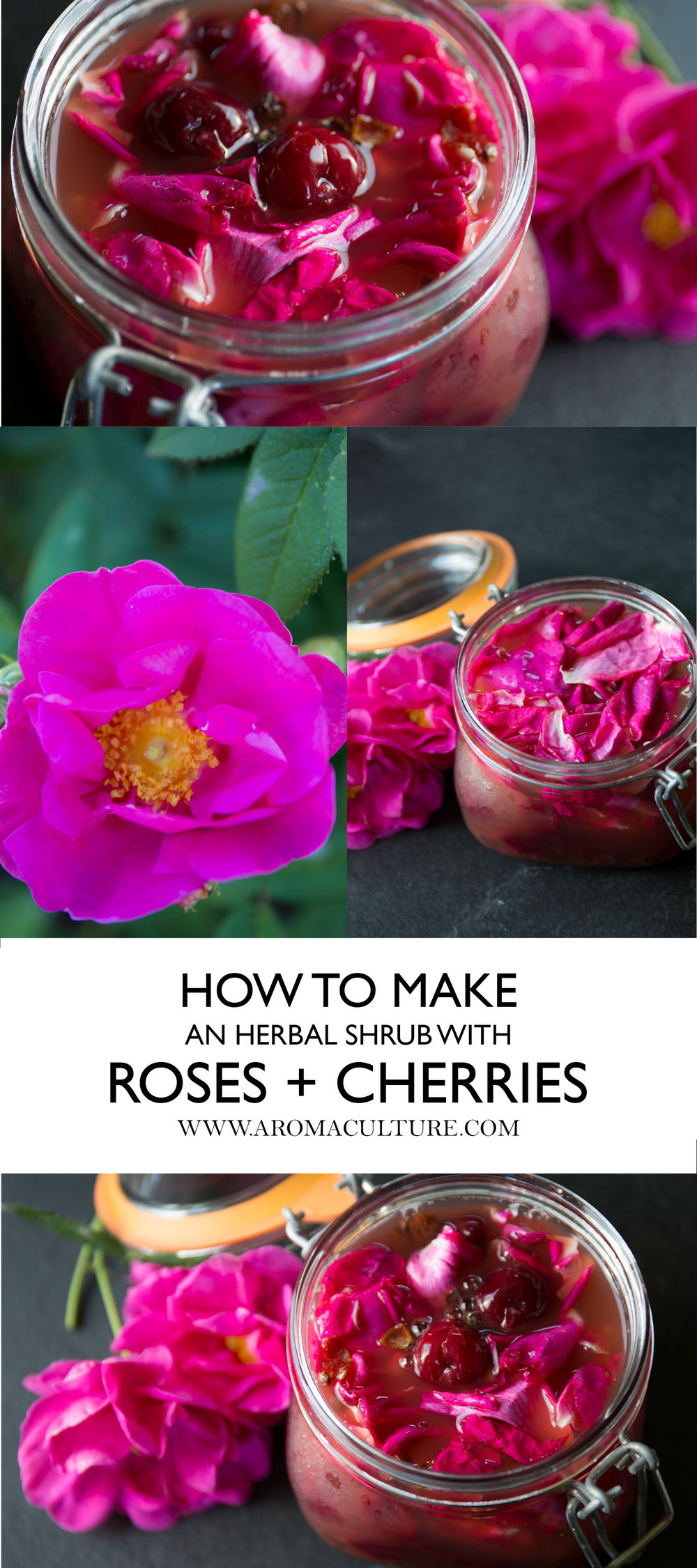 HOW TO MAKE AN HERBAL SHRUB WITH ROSES AND CHERRIES.jpg