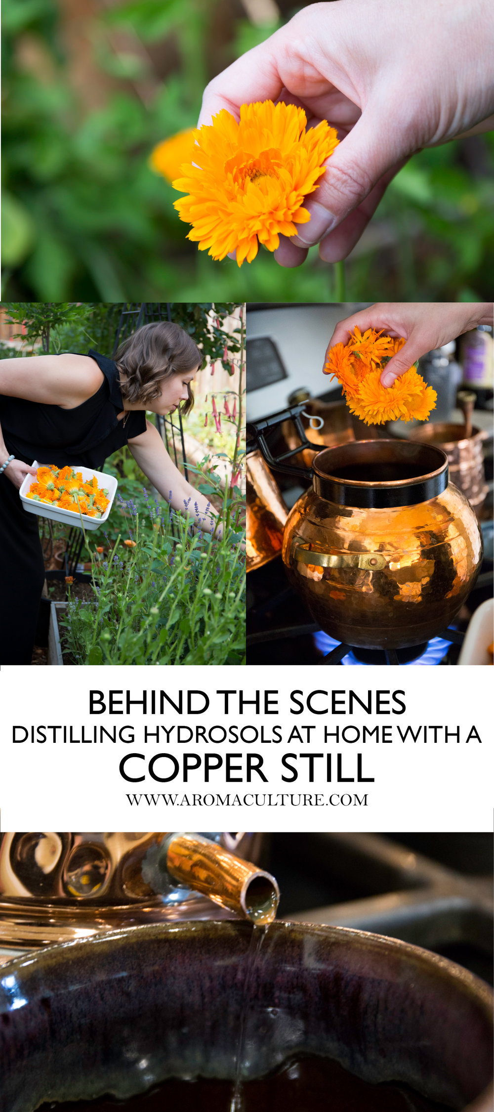 BEHIND THE SCENES DISTILLING HYDROSOLS AT HOME WITH A COPPER STILL AROMACULTURE.jpg