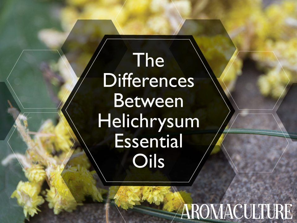 the-differences-between-helichrysum-essential-oils-aromaculture.png