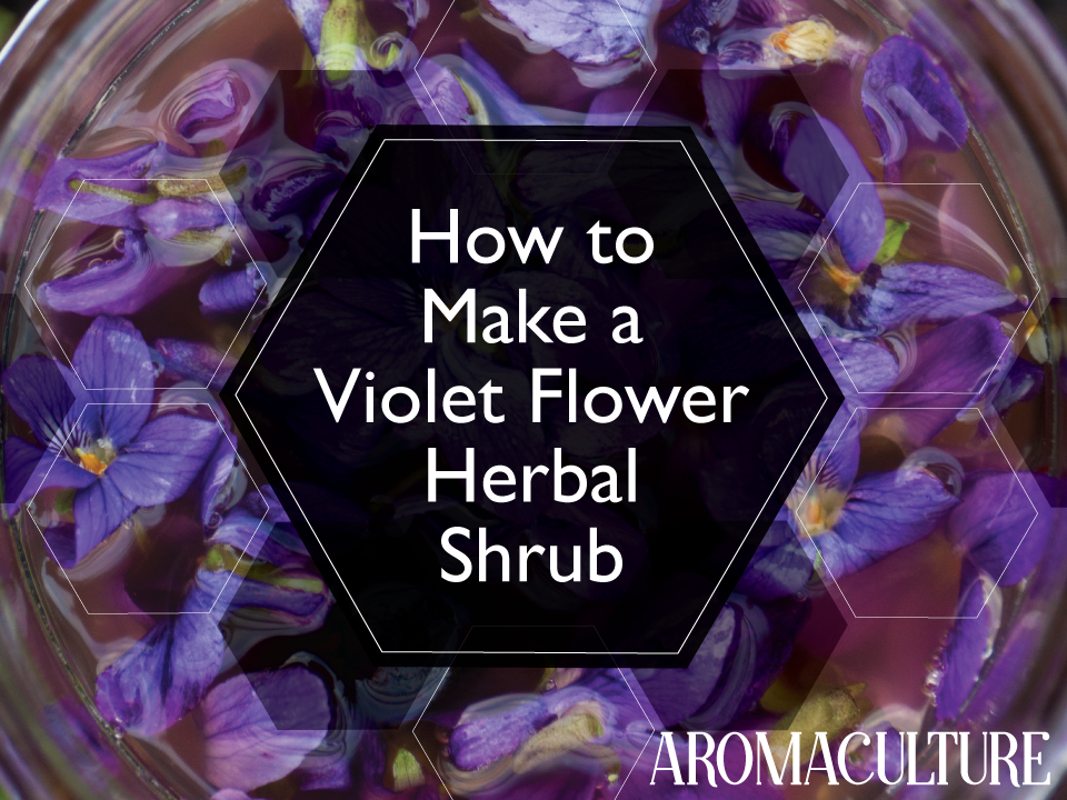 Violet Flower Herbal Shrub Recipe Aroma Culture