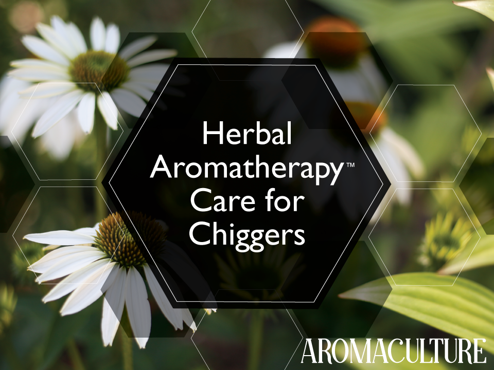 HERBAL-AROMATHERAPY-FOR-CHIGGERS.png
