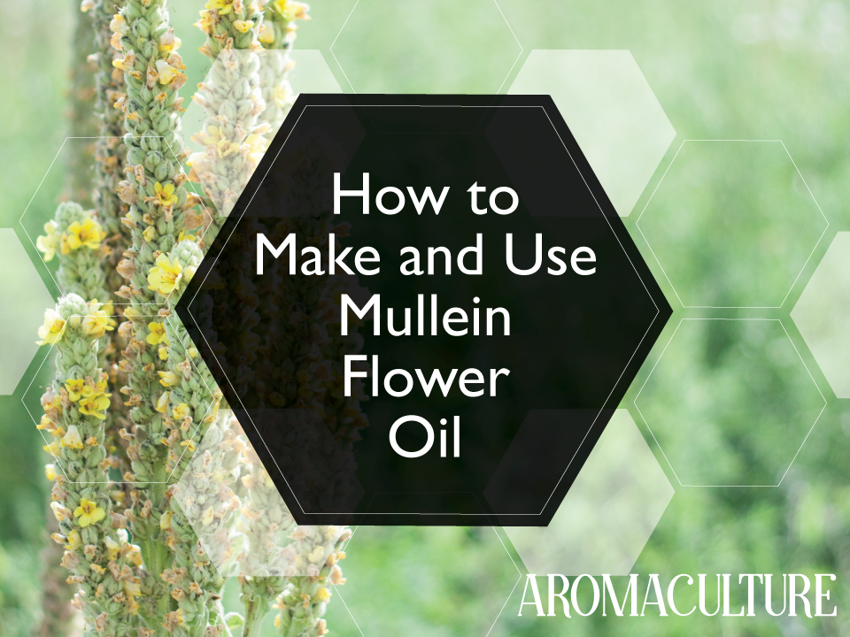 how-to-make-and-use-mullein-flower-oil.png