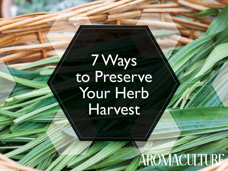 7-ways-to-preserve-your-herb-harvest-2.png