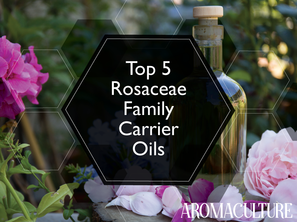 top-5-rosaceae-family-carrier-oils-aromaculture-2.png