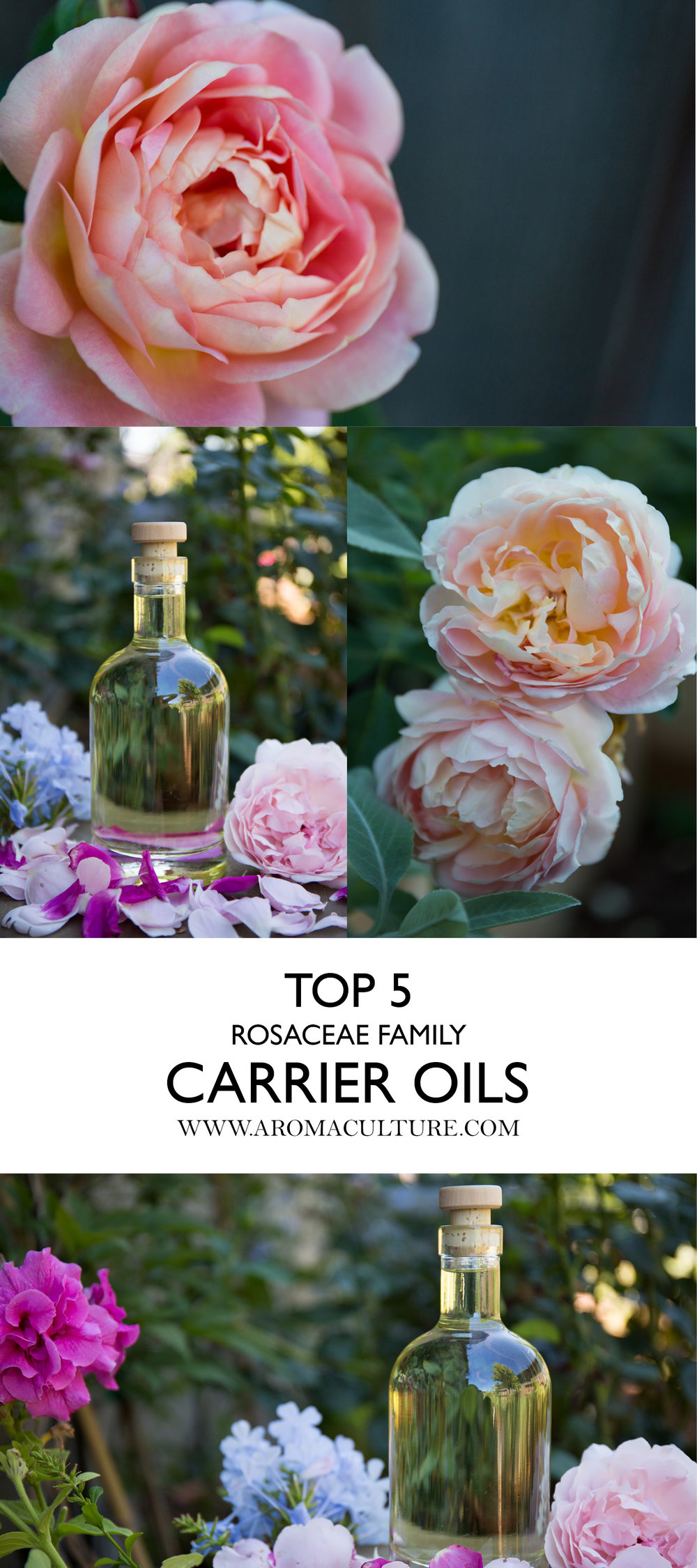 TOP 5 ROSACEAE CARRIER OILS AROMACULTURE.jpg