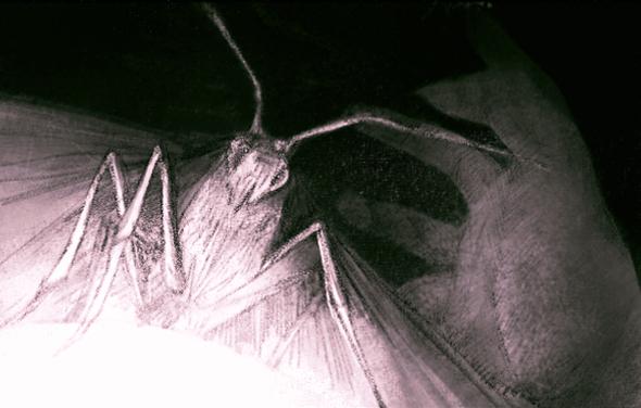MojoWang_Moth_4.jpg
