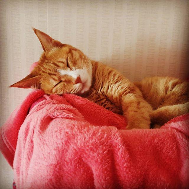 Cat's nap.  #catsarecool #catsofinstagram #siesta