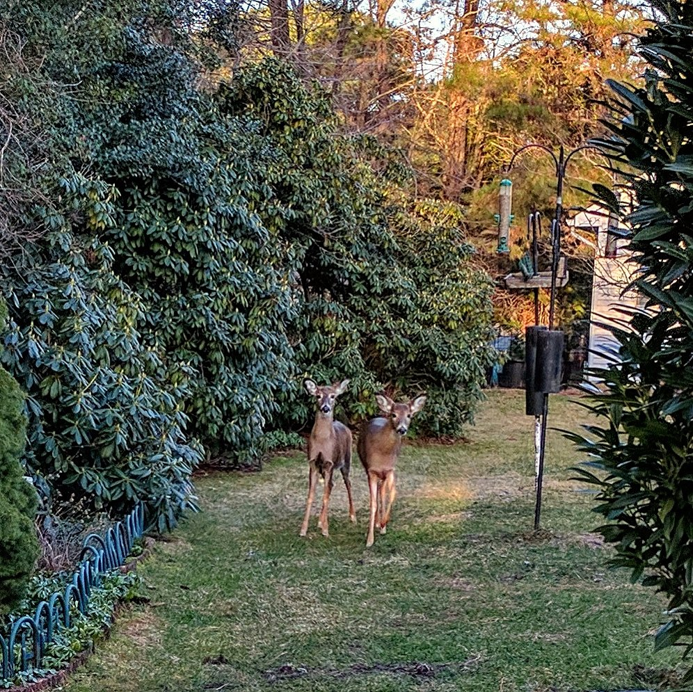 The deer want to know if those treats are for everyone...