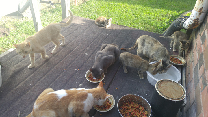 Breakfast with the glaring of cats on the back porch.