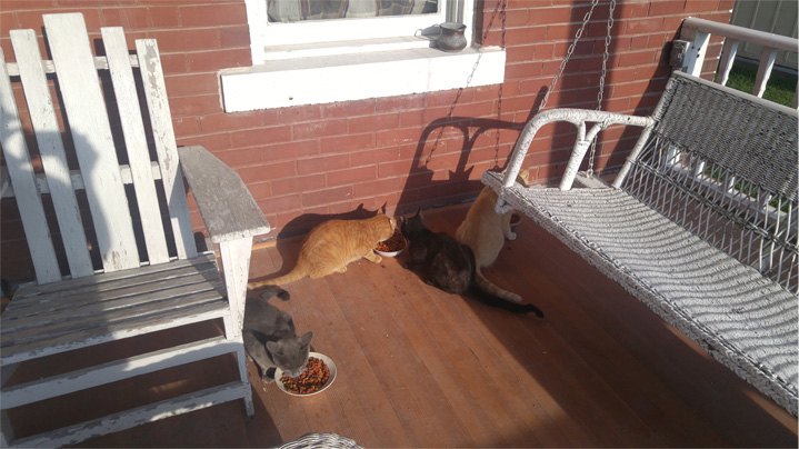 Breakfast on the front porch with our pounce of cats.