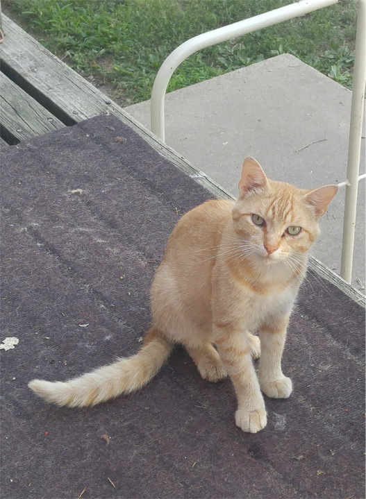 Goldie, he is completely feral.
