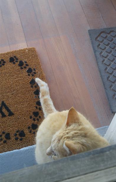 Garfield patiently waiting at the front door.