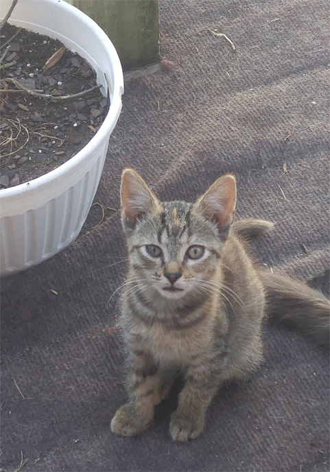 One of the kittens. I am not sure if this one is Wings or the one that isn't named yet.