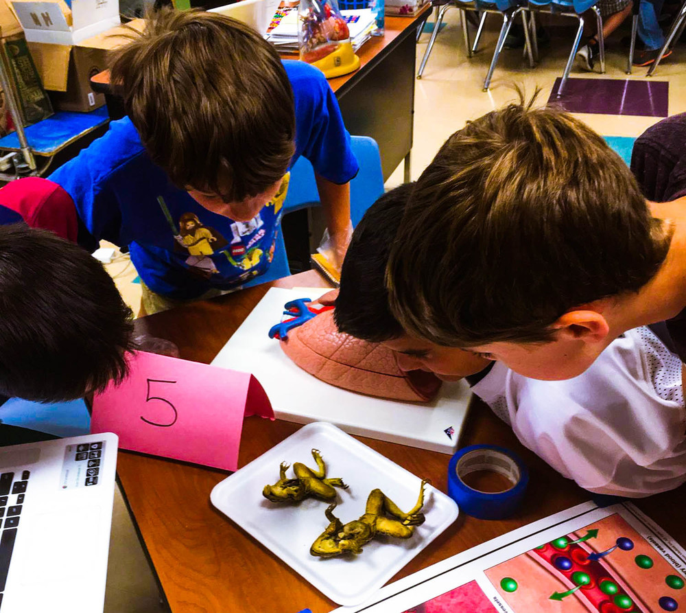 A group of children examining dissected frogs.  These specimens were used to highlight the respiratory and cardiovascular systems.  Photo credit: Vale School District